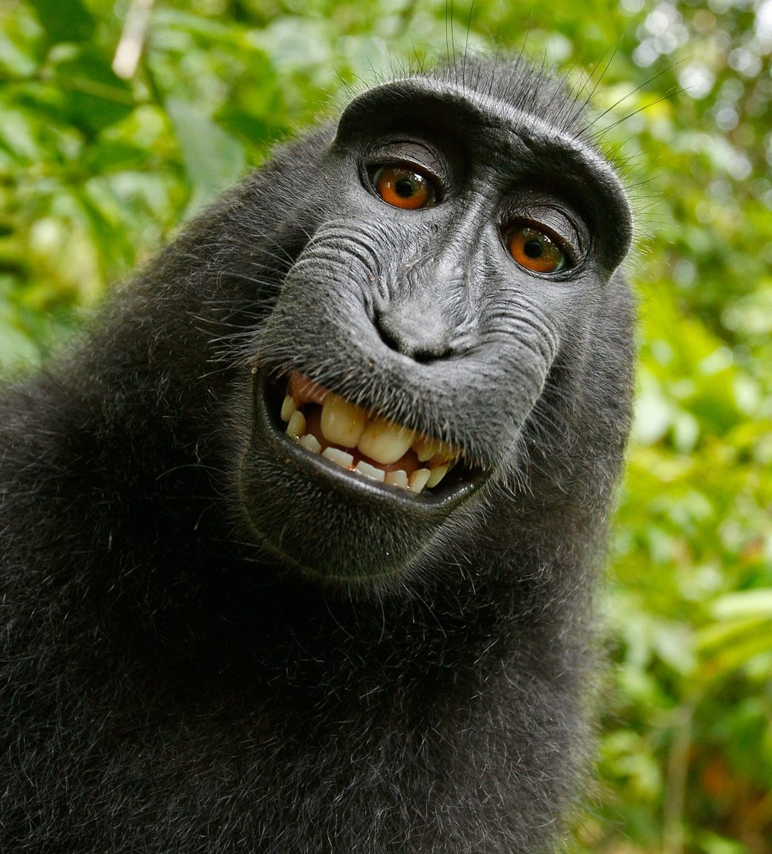 Cheeky monkey smiling at the camera. Just like me this January!