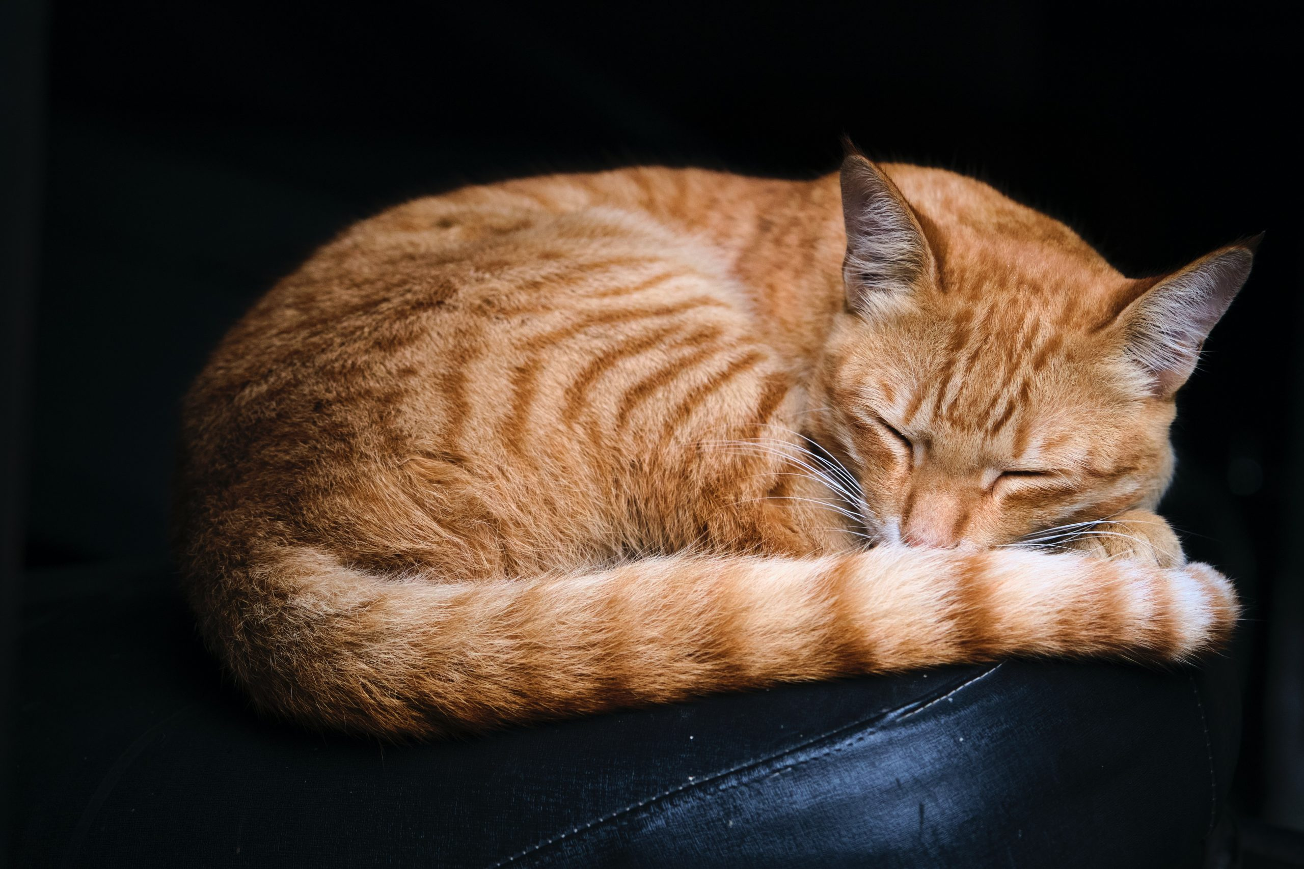 Would cats still sleep all day if they had a concept of time?